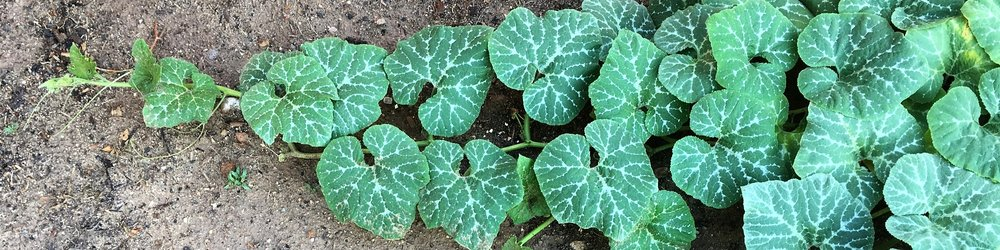 Reaching.jpeg