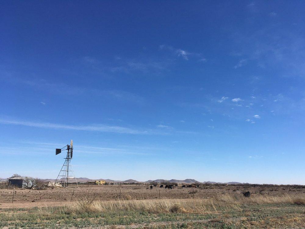 Bootheel cattle