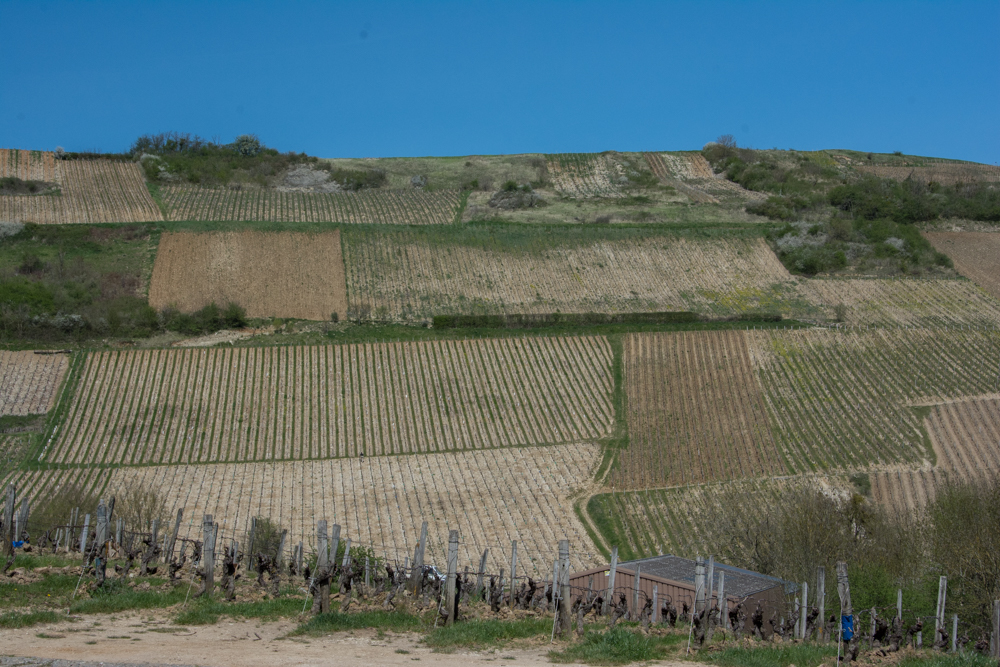 Different plots are owned by different vineyards. Some plots are left wild in order to help with erosion.