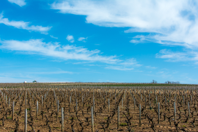 A vineyard in Pouilly-Fum é