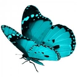butterfly image.jpg