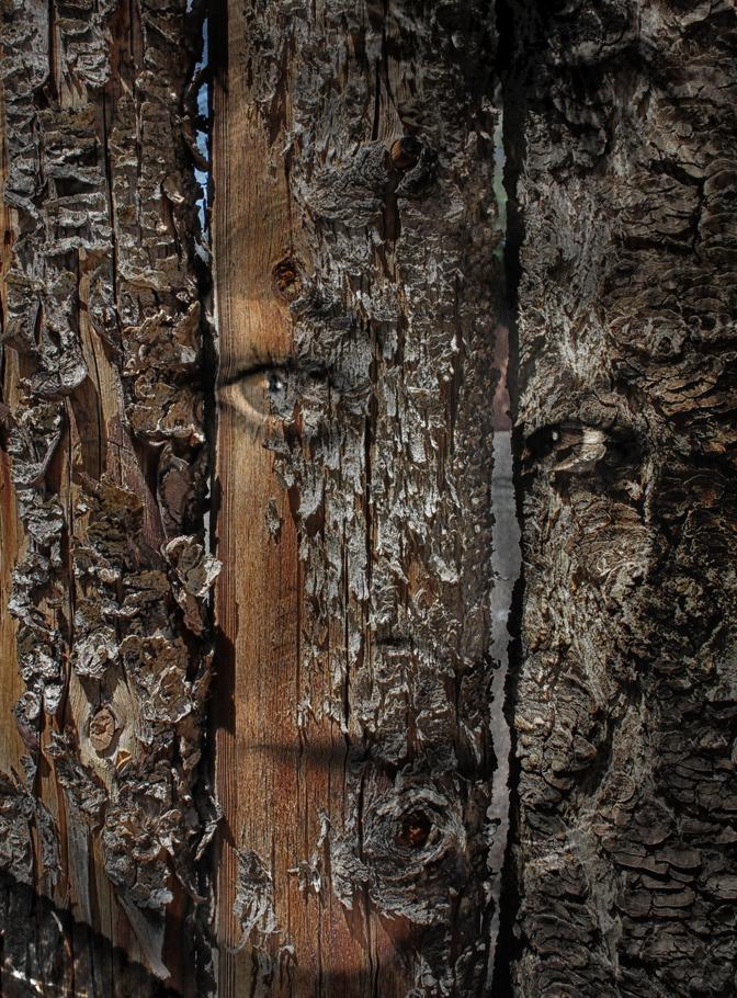 wood17.jpg