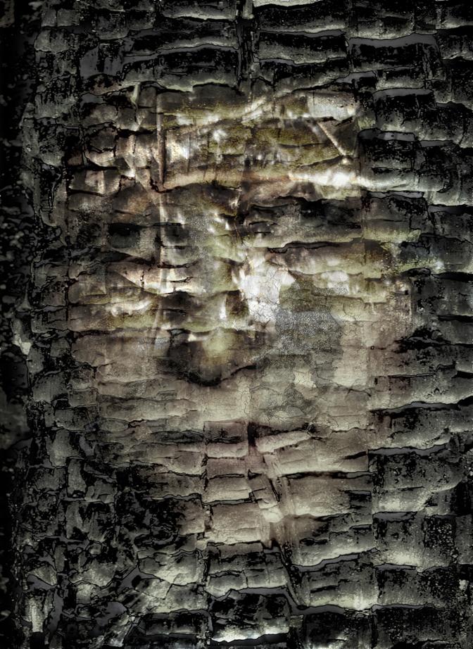 wood14FIN.jpg