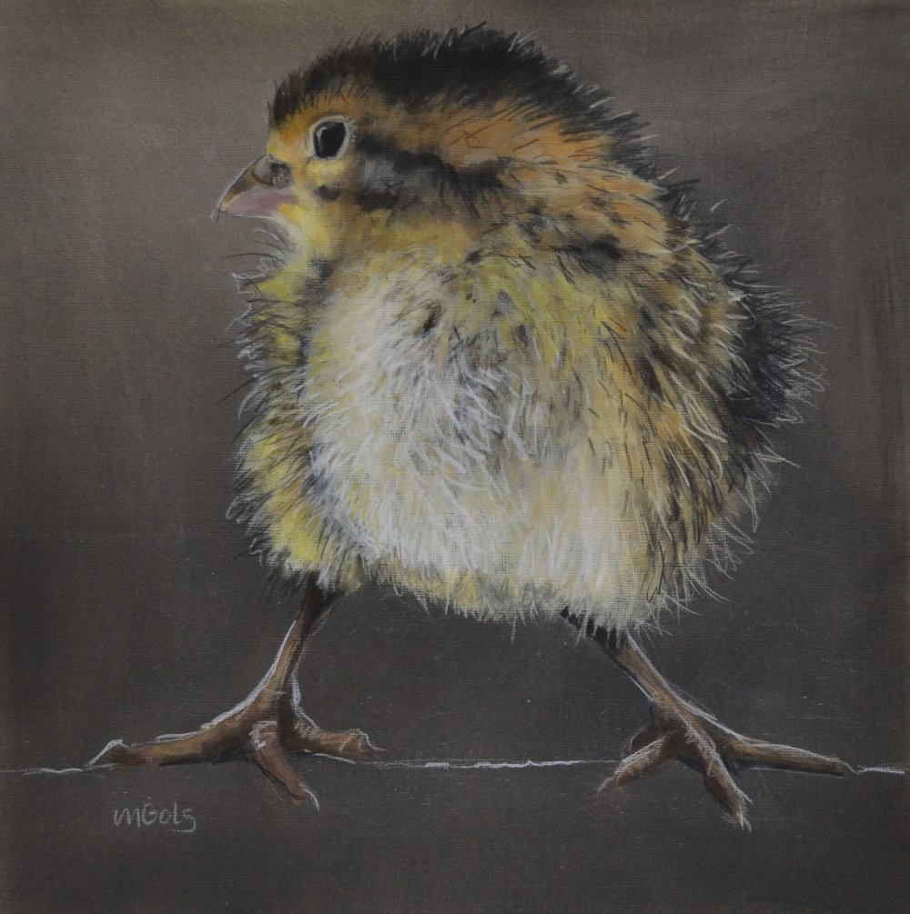 Jane Ingols Art, 12x12