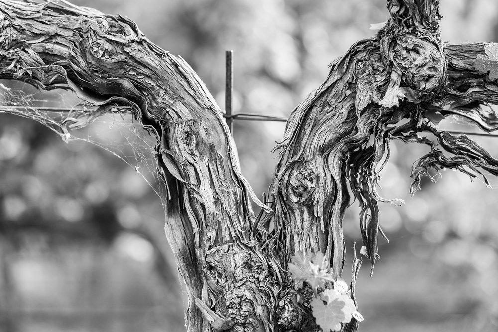 Old_Vine
