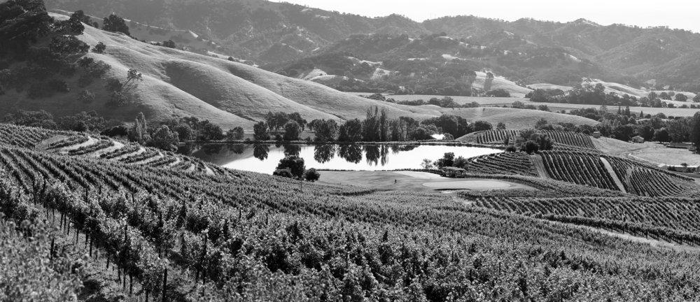 Vineyards_and_Lake