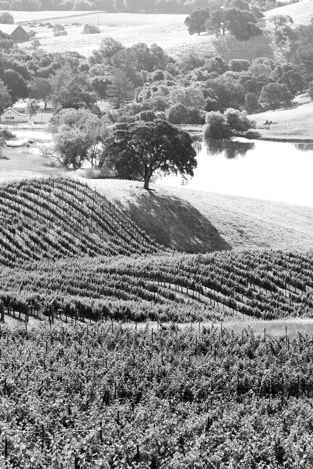 Vineyards_Hestan