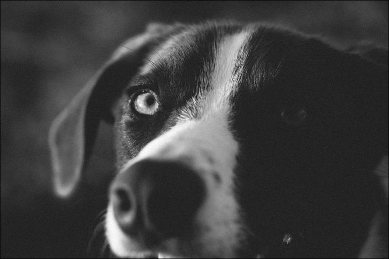 Nashville Wedding Photographers | Nashville Pet photographers | Dog Photos