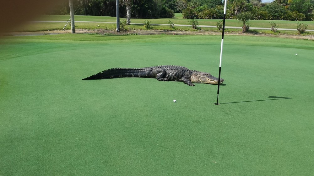 Myakka Pines Golf Club/Facebook