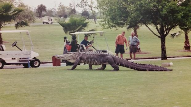 """Big George""/Myakka Pines Golf Club"