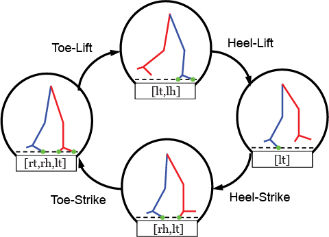 Identified Hybrid Dynamical Model of Gait