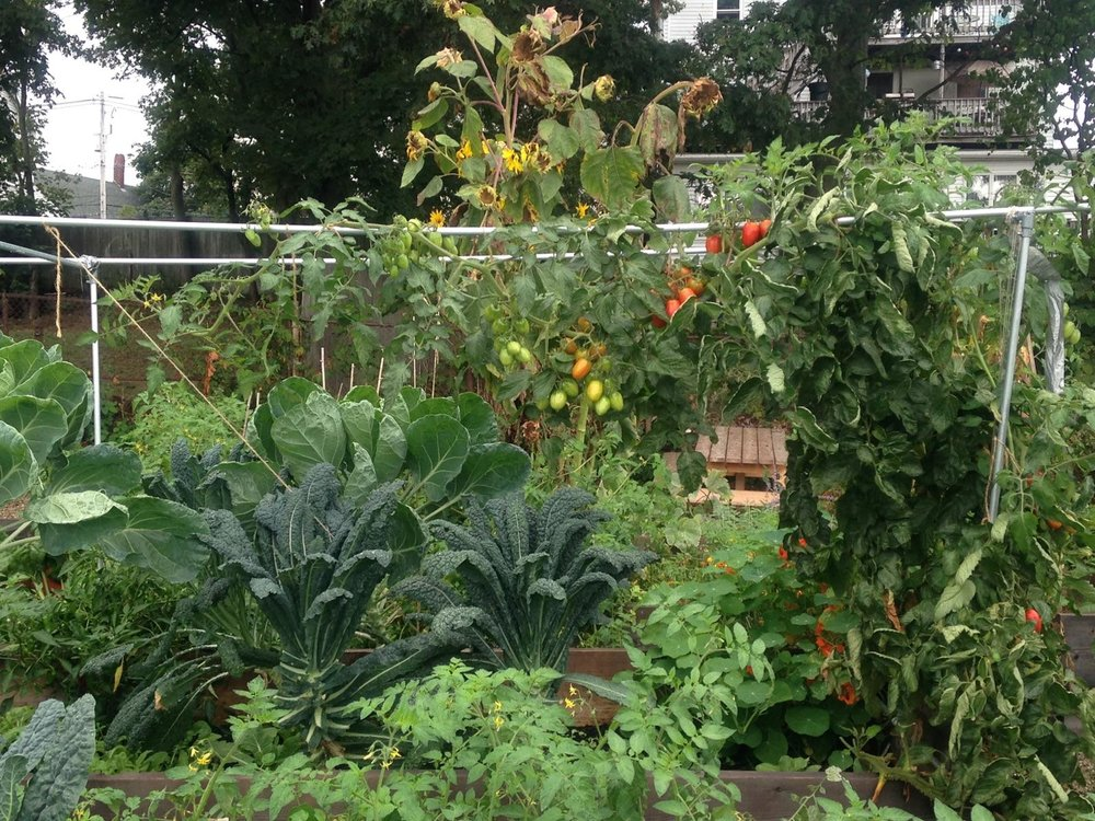 Garden Beds in Abundance at Burnham's Community Garden