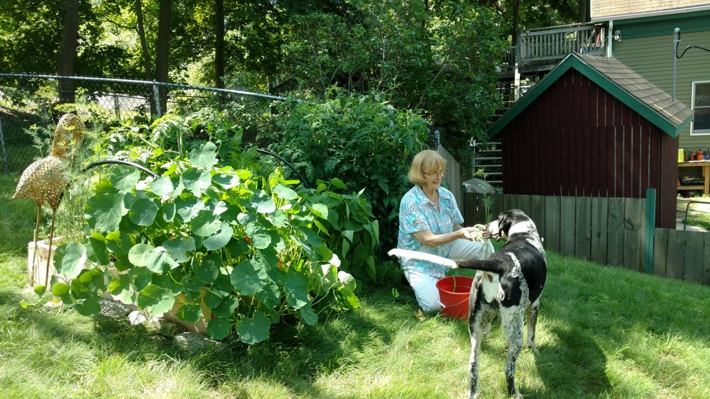 Pat and her hound in the garden