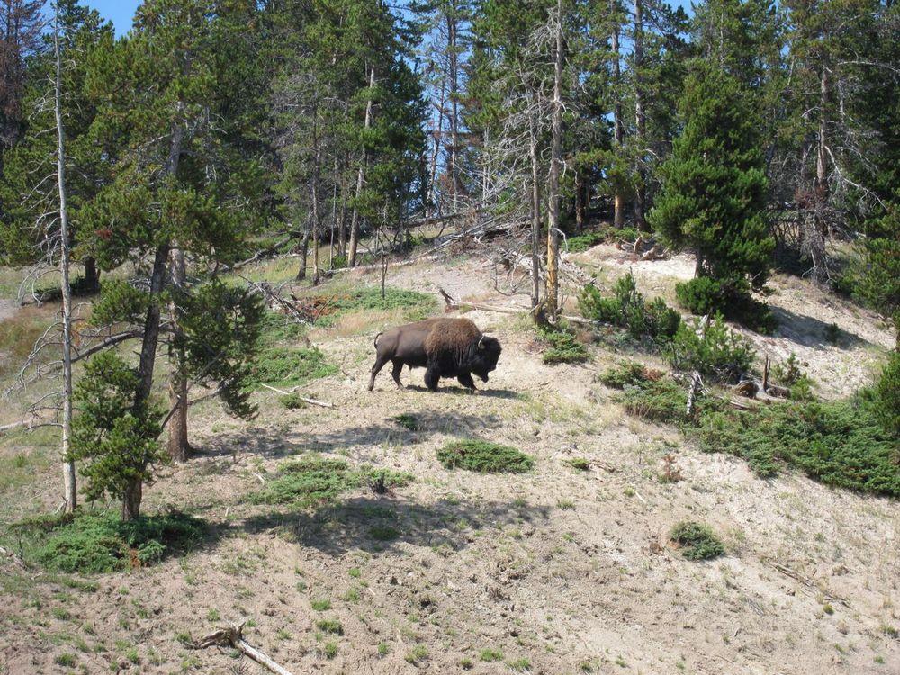 Wyoming - 35.jpg
