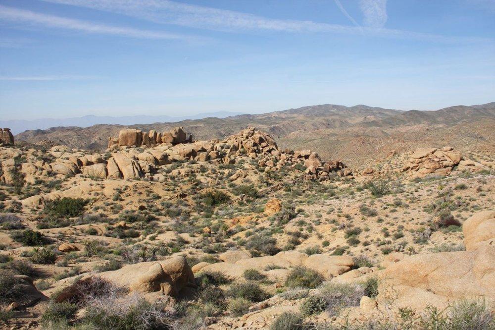 Desert Expanse Joshua Tree