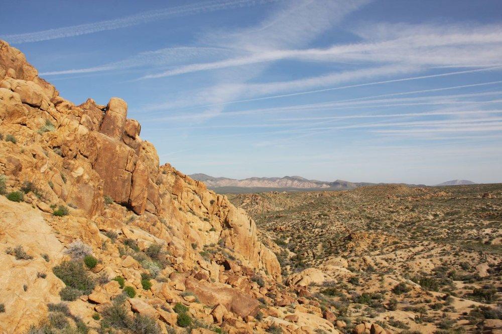 Desert Hillside Joshua Tree