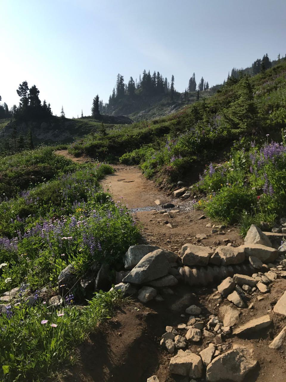 Ranier Trail.jpg