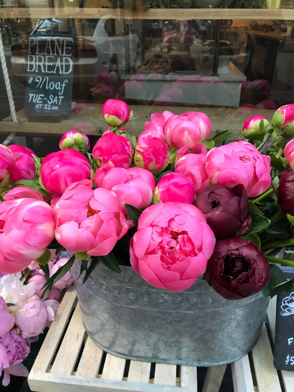 The London Plane Peonies.jpg