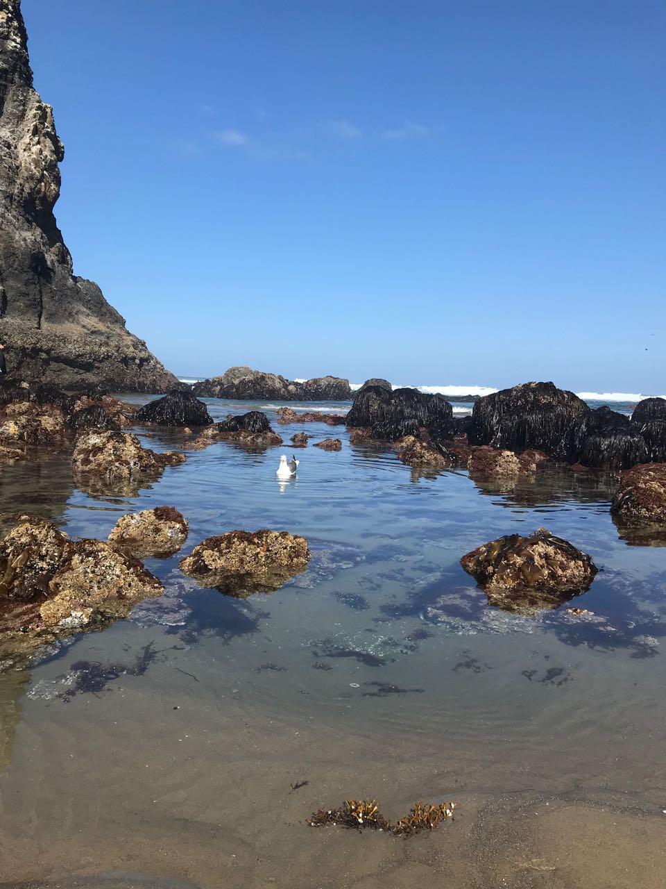 shoreline.jpg