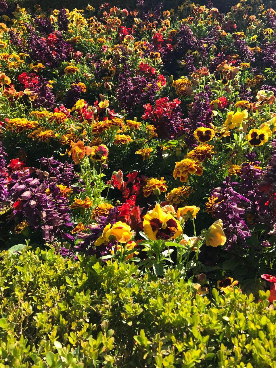 Butchart flowers.jpg