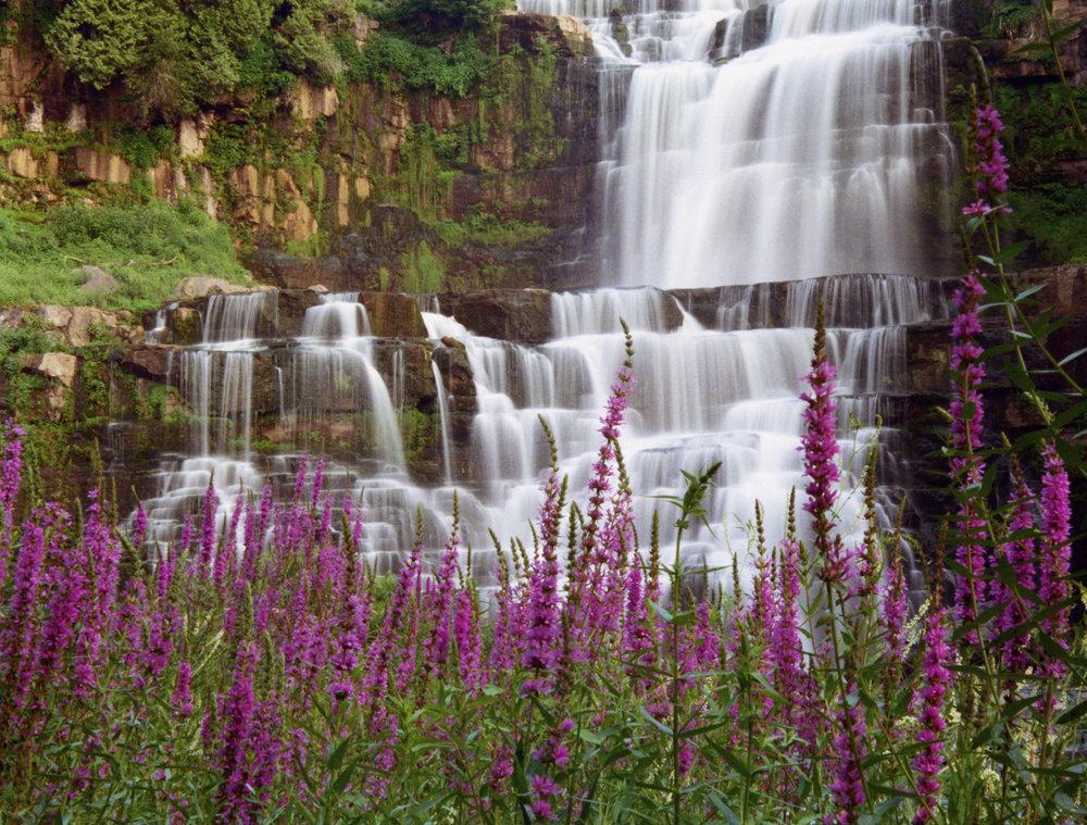 Chittenango-Falls-and-Purple-Strife-000009879126_Medium.jpg