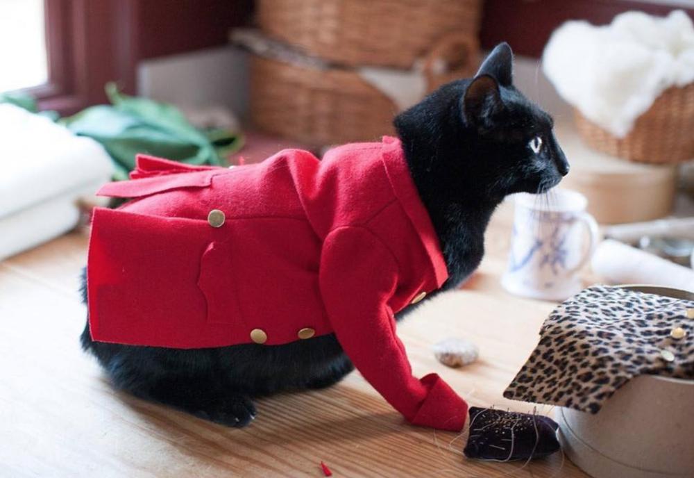 Cat in red coat.png