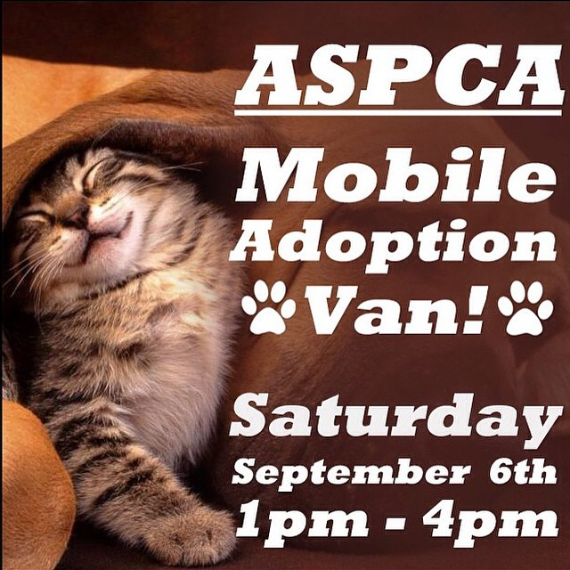 Before & after the #nyfw shows check out our shop neighbors @8ofswordstattoo animal adoption event in #Williamsburg #Brooklyn Today! 🐱❤️🐶 #aspca #adoptdontshop #catsofinstagram #dogsofinstagram #caturday #adoptingisthenewblack (at Eight of Swords)