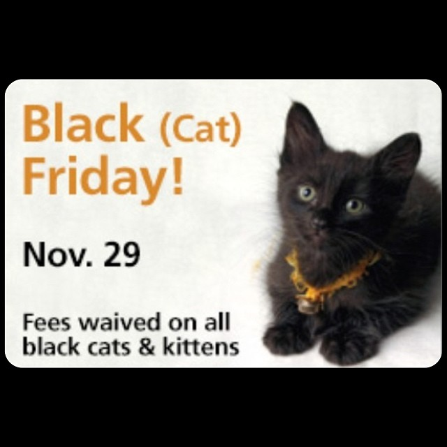 As a small business our shopping holiday is tomorrow so today we celebrate #BlackCatFriday …If you are looking to adopt a kitten or cat the Manhattan #ASPCA (424 E. 92nd St.) is waiving the adoption fee on ALL cats today! And if you happen to shop w/us & show proof of adoption we'll give you 50% off anything in store today…now that's a #BlackFriday deal! #antoinettevintage (at Antoinette)