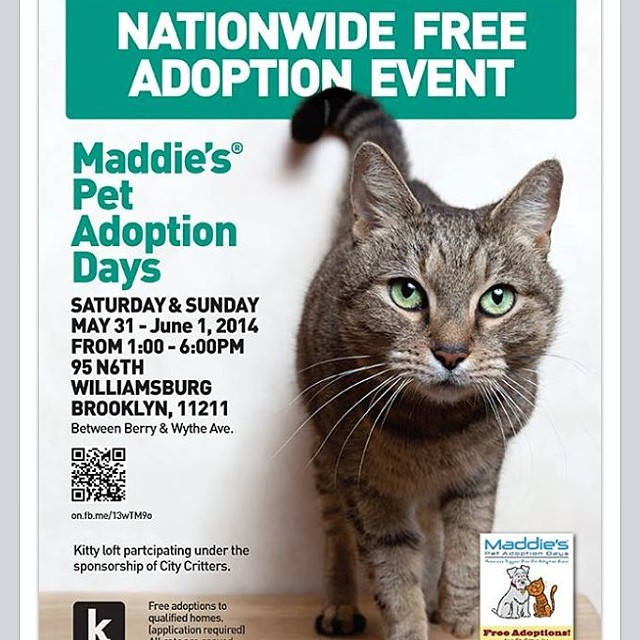 "This weekend is National Pet Adoption Day! Check out here in Williamsburg, Brooklyn the ""Kitty Loft"" located at 95 North 6th St. (1-6pm) Hundreds of Cats & Kittens are up for FREE adoption! 🐱❤️🐶#Supportlocalnokillshelters #adoptdontshop #nationalpetadoption #kittyloft  (at kitty loft)"