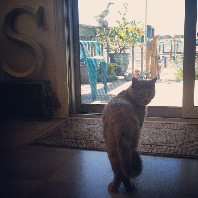 Early morning backyard cat views 🐈🌅⚓️ #NJ #Neko #Tortie #catsofinstagram #LapuaTheCatFromBrooklyn (at Cherry Quay)