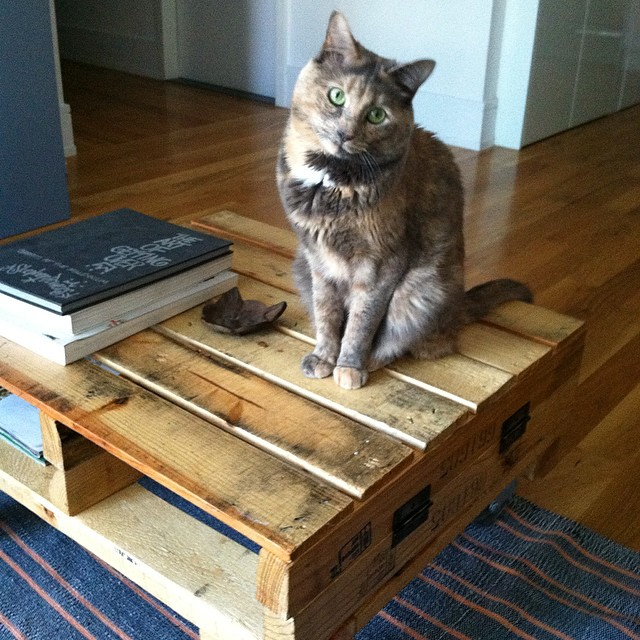 Lapua wishes everyone a Happy Caturday! 😻  #Lapuathecatfrombrooklyn #catsofinstagram #catsofantoinette #williamsburg #Brooklyn #caturday  (at Casa La Kitten)