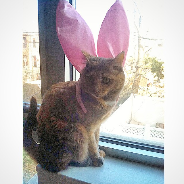 Happy Easter! The shop will be closed today so we can spend some time coloring Easter eggs & eating chocolate bunnies with our families 🐇#LapuaTheCatFromBrooklyn (at Casa La Kitten)