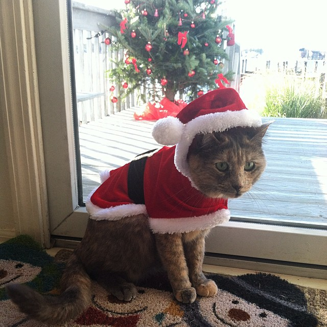 Merry Christmas from the Jersey Shore 🎄🐱🎅 #LapuaTheCatFromBrooklyn (at Cherry Quay)