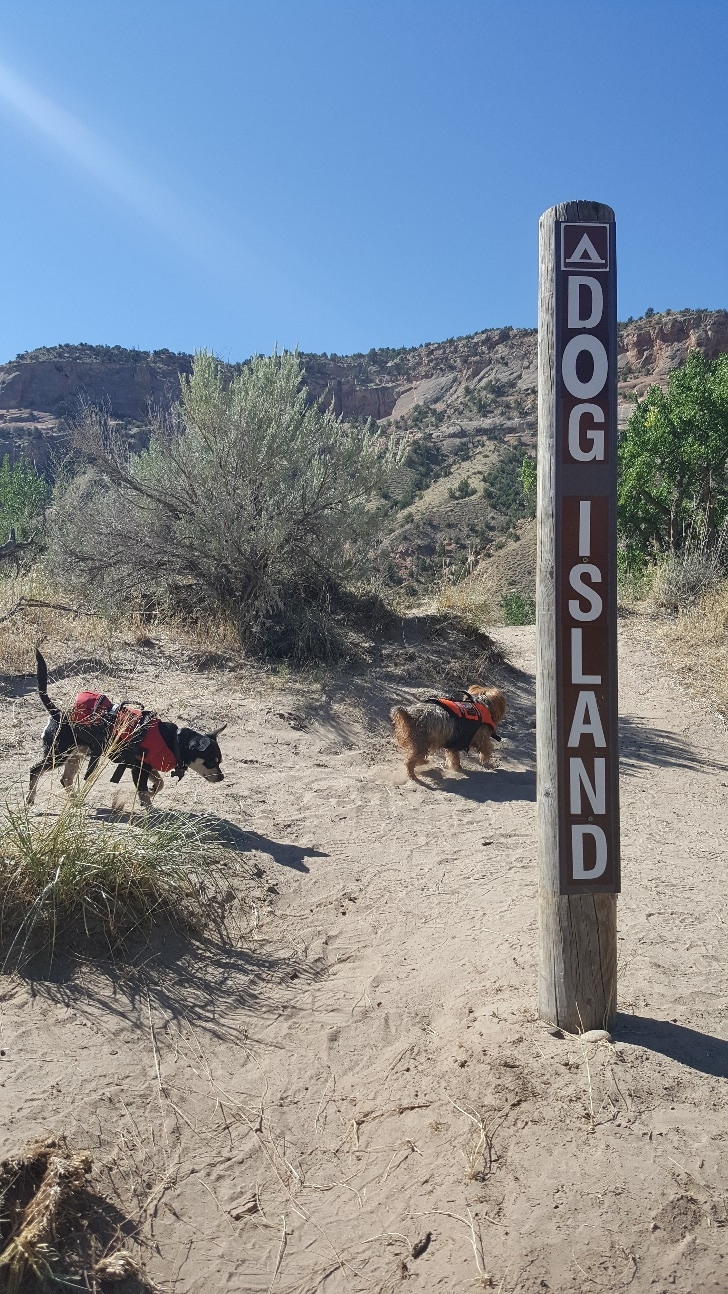 Dog Island campsite. Photo: CCA