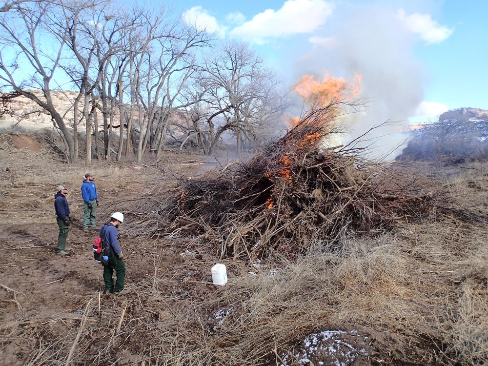 Burn Piles (1) (1).JPG