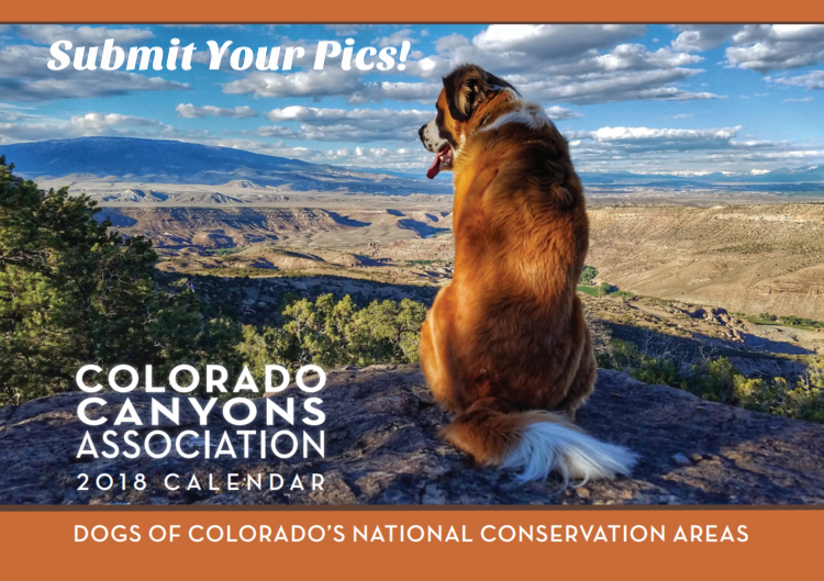 Submit your photos by August 24th for a chance to be featured in our   2019 Calendar: Dogs of the NCAs!
