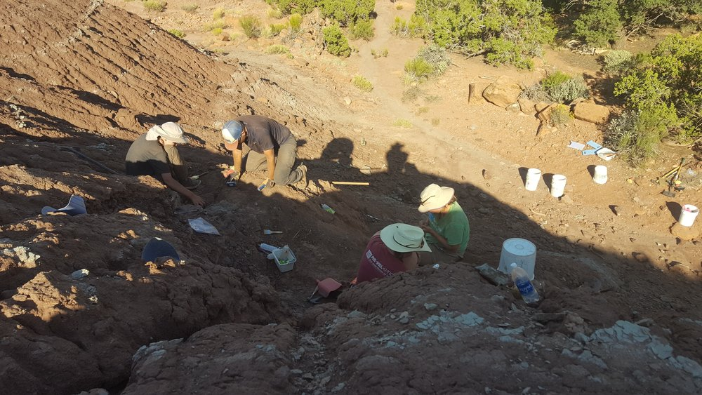 Paleontologists work on an excavation in National Conservation Lands.