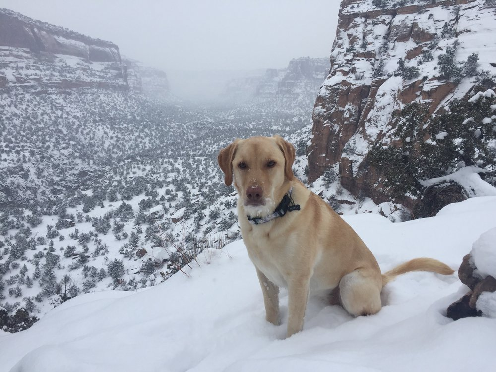 Our puppy-friendly public lands are open, snow or shine!