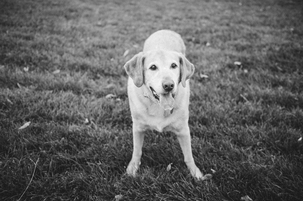 kansas city dog photographer