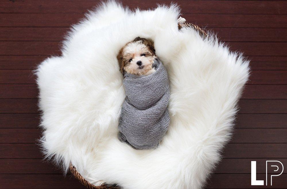 Puppy Newborn Session