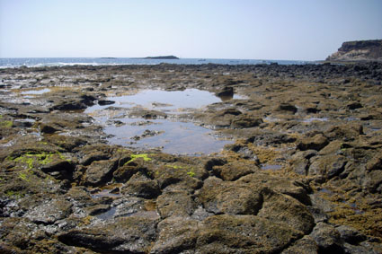tenerife-seashore-low-tide-conchology-field-trip-article.JPG