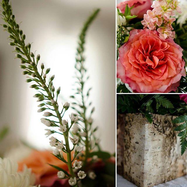Beautiful flowers for the #sollicitoyackel wedding. Loved the colors and the birch boxes . . . . #sanantoniophotography #adamsfairacrefarms #saphotography. #crookedcreekalpacafarm