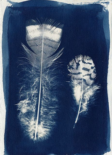 feathers and indigo