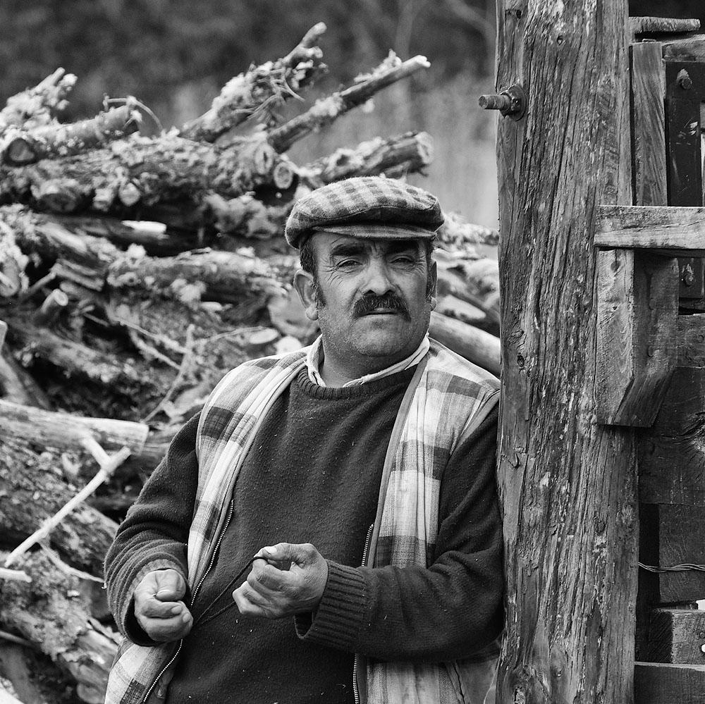 chilean woodgatherer