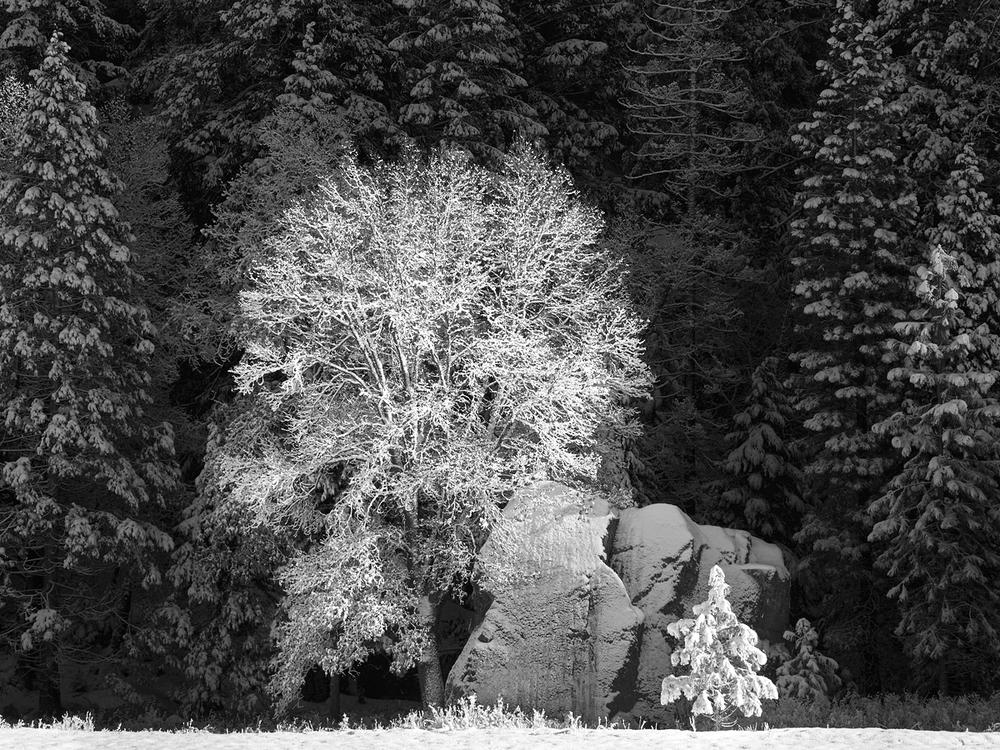 1215.Yosemite_Wawona.112.jpg