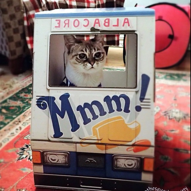 It's Friday and @thesauerkrautkitty is cruising in style! #famousoto 🍦🍦🍦