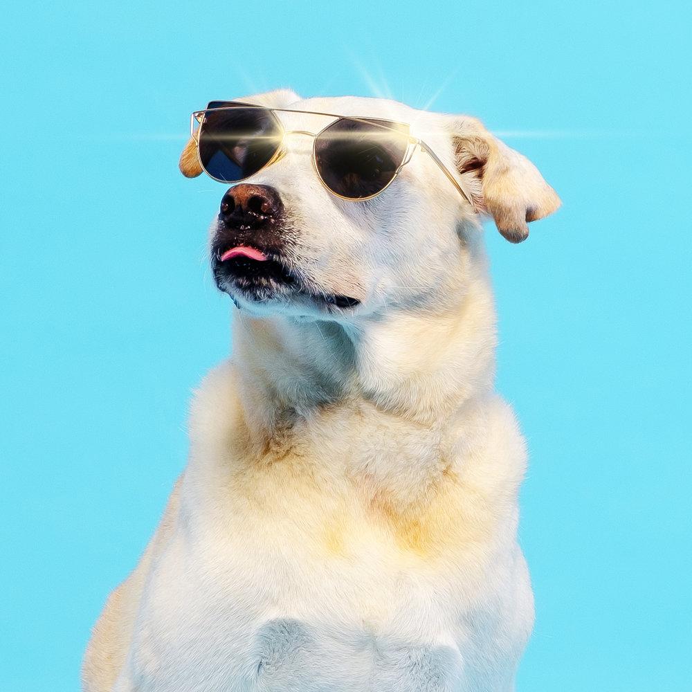 05-18 HM Sunglasses Dogs 1.jpg