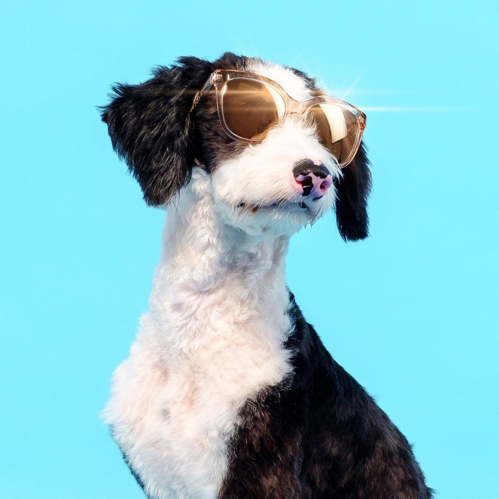 05-18 HM Sunglasses Dogs 3.jpg