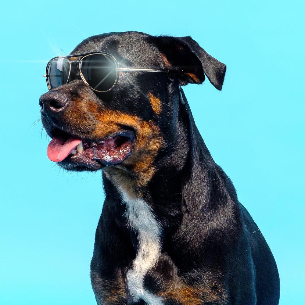 05-18 HM Sunglasses Dogs 4.jpg