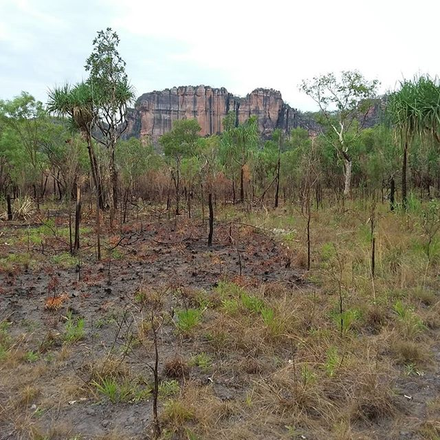 Its great to be back in Kakadu and working with the team from the office of the supervising scientist as they set up AusPlots method plots.  #soilscience #basalarea #research #savannah #fireecology #invertebrates #pointintercepttransect #researchinfrastructure #wehaveyourdata #tern_au #freelyavailsbledata #soilandveg #soilbulkdensity #vegetationstructure #kakadunationalpark #plantgenomics #plantgenetics #plantisotopes #leafareaindex #herbariumsamples